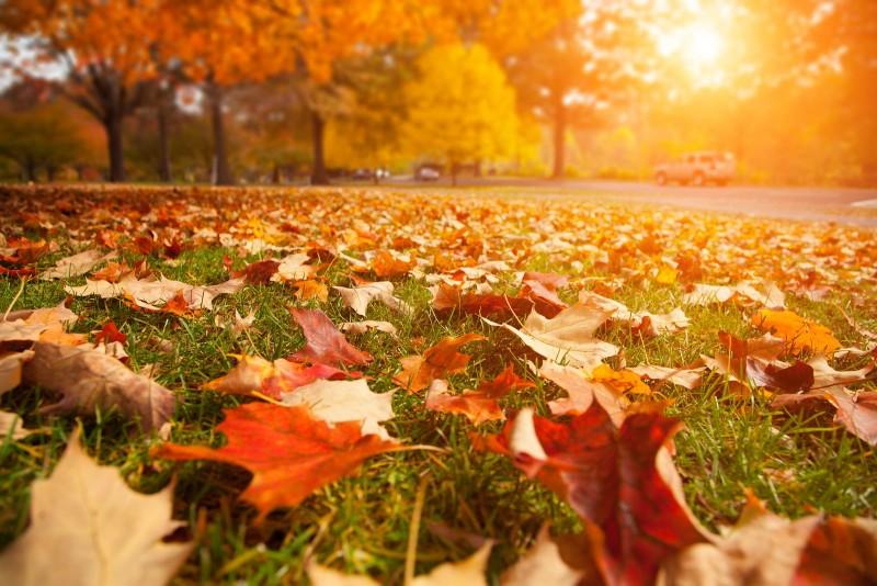 Fall Heating & Furnace Maintenance Agreements